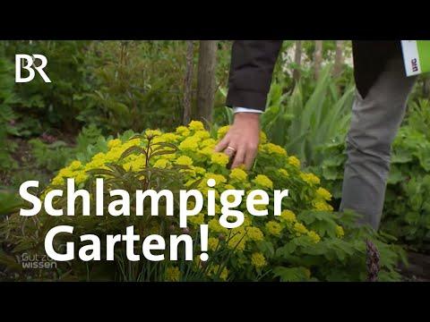 Warum Ein Unperfekter Garten Gut Für Insekten Ist | Gut Zu Wissen | BR
