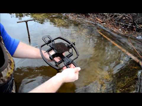 Beaver Trapping Basics-Footholds
