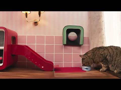 Energiát a cicáknak - Boldog Cicák Világnapját!