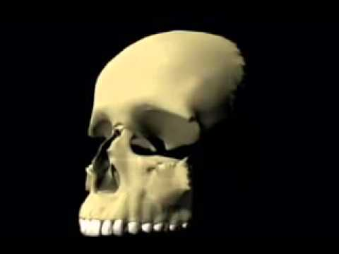 Skull animation\1 thumbnail