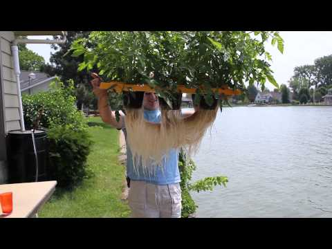 Home Made Outdoor Deep Water Culture  Dwc  Hydroponics Part 2