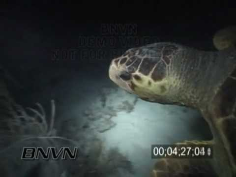 8/4/2001 Dry Tortugas, FL - Night Diving And BIG Loggerhead Turtle Attack