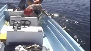 Un homme va faire une découverte choquante en s'approchant d'une baleine