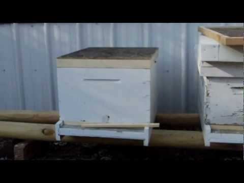 Trapping Bees With A Quebec Escape. video