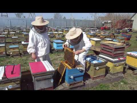 все о ловле пчел