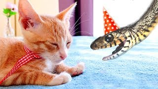 Cute Birthday Surprise: THE KITTEN!