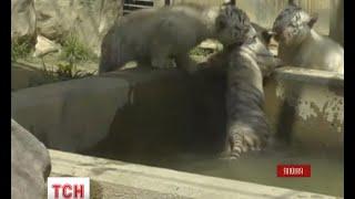 Конфузна прем'єра у японському зоопарку - (видео)