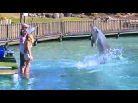 Swimming with Dolphins at Sea World Gold Coast Australia