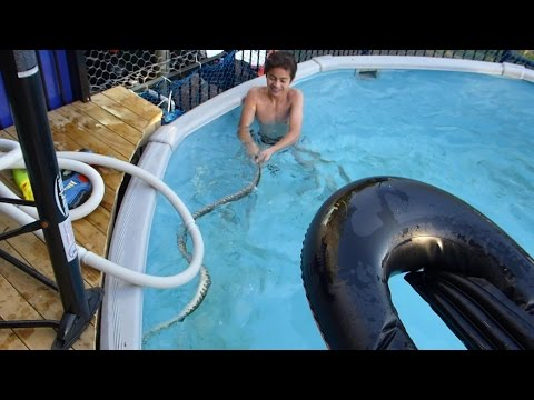 Download Kids Swimming With A Lethal Snake In The Pool Video Mp3 Mp4 3gp Webm Download