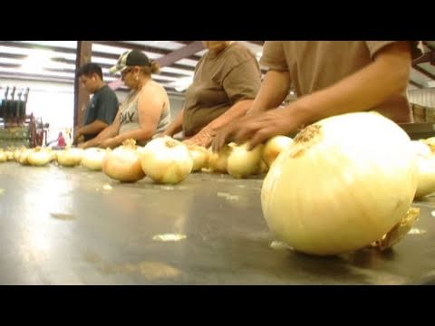 CNN: Immigration law threatens farm labor