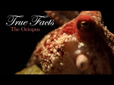 True Facts About The Octopus video