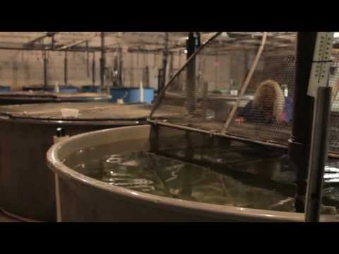 Aquaculture - Fleming College