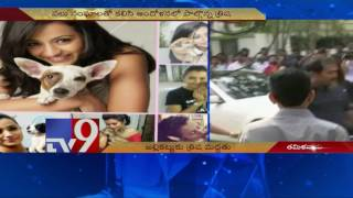 Heroine Trisha gives in, supports Jallikattu - TV9