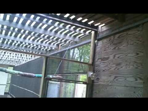 Tour of NBG Eaglet enclosure