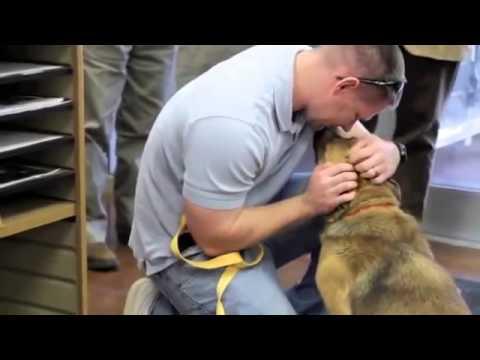 El perro Dora se reúne con su familia después de estar perdido 7 meses