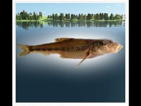наша рыбалка быстрянка