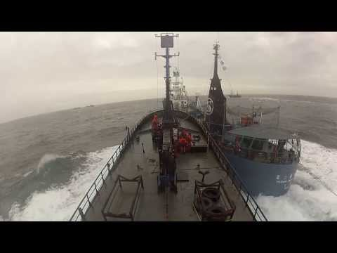 NEW FOOTAGE: Sea Shepherd attacked by Japanese whaling fleet - 14.02.02