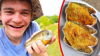 Panfish/Bluegill Catch Clean Cook!