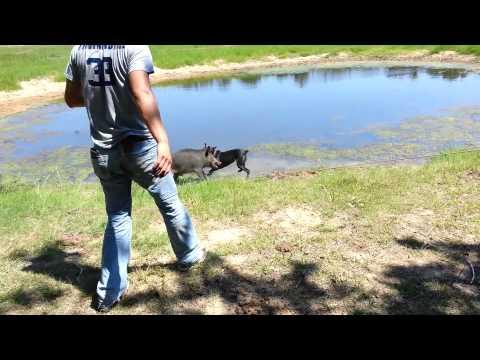 Catch dog training