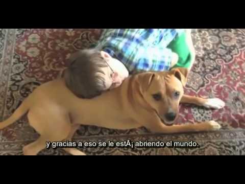 Un niño con autismo recibe a una perrita maltratada
