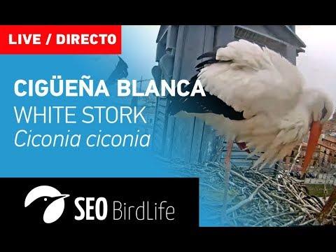 Cigüeña blanca - Alcalá de Henares - SEO/BirdLife