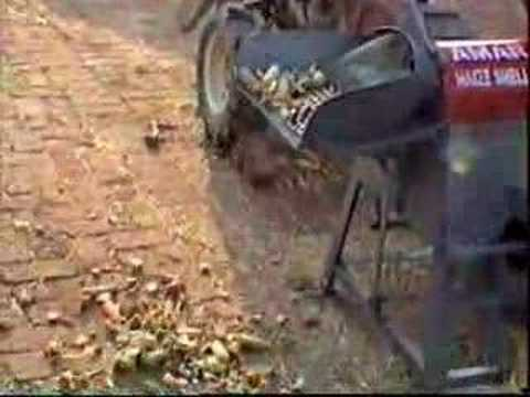Japonica Striped Maize. AMAR Maize Sheller 2-Wheel
