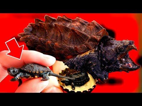 10 фактов про ЧЕРЕПАХ, какие черепахи самые БОЛЬШИЕ в мире