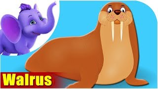 Walrus - Animal Rhymes in Ultra HD (4K)