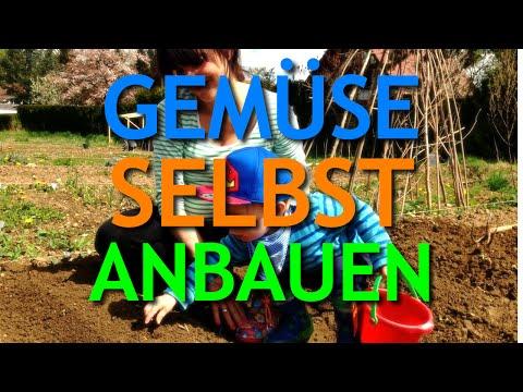 Gemüse Selbst Anbauen   Www.paulkliks.com