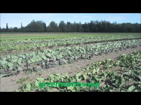 Palmer Alaska U-Pick Farm (Full Length Video)