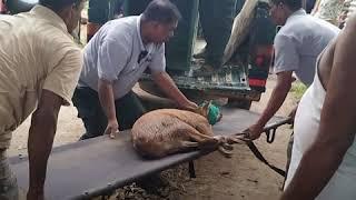 Assam Floods | Kaziranga: काजीरंगा में बाढ़ का खतरा, जानवरों को बचाने की मुहिम जारी