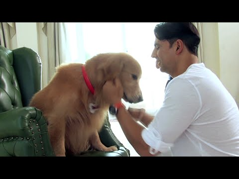 Every Dog Has Its Day - Entertainment Behind the Scene Making