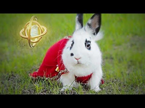 Epic Bunny's Adventure