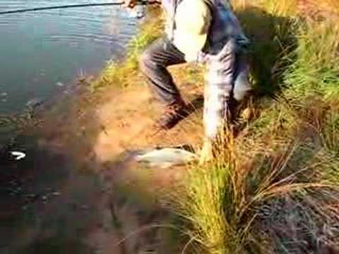 Striper fishing in middle Tennessee