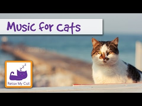 Music for cats Music for Cats and Friends: Soothing Sounds to Calm your Cat The Original