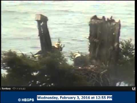 2 3 1253 dad ib wa can; starts alerting and female in to the cu cam, both are calling