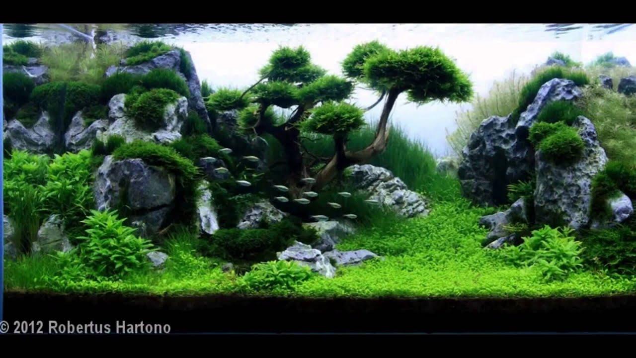 Ландшафт аквариума своими руками