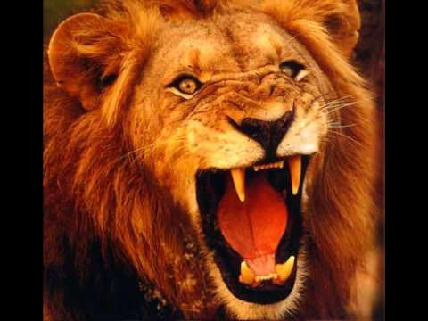 Regele Junglei
