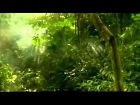 Lost In Papua Trailer Indonesian Movie Trailer 2010