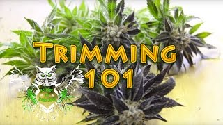 Trimming Cannabis   How to Trim Marijuana   Wet trimming   Harvesting Weed