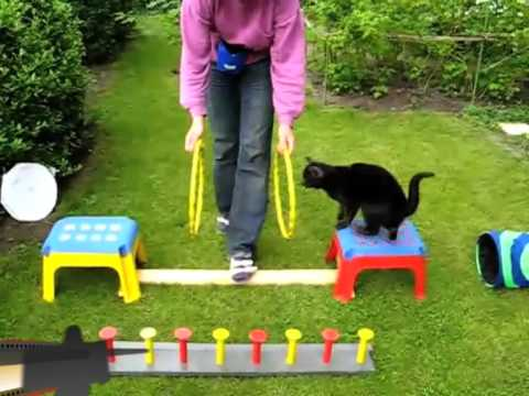 Cats doing dog tricks