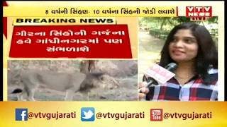 Gandhinagar: Pair of lions to be brought from Junagadh to Indroda park | Vtv News