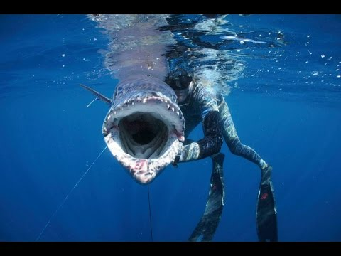 Extreme Blue Water Spearfishing Trips Mozambique - Shooting large fish with The Rob Allen Belt Reel