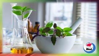 Como hacer preparados caseros con plantas o hierbas medicinales para uso externo e interno