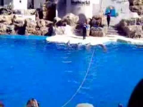 san-diego-seaworld-how-high-can-a-dolphin-jump.html