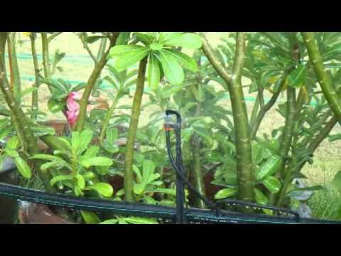 รับคำนวณ ออกแบบ ระบบให้น้ำแก่พืช แบบคุ้มค่า 2