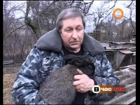 REN Кролики в Кировограде Капелюшный Федор_Рябченко