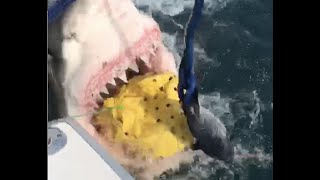 Great white shark shocks New Jersey fishermen