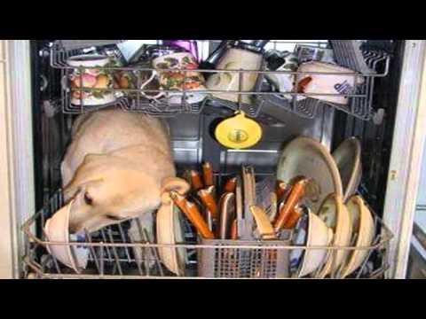 General Public - Dishwasher