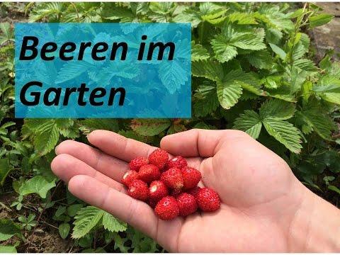 Beeren Im Garten | Kleine Ernte Und Vorstellung